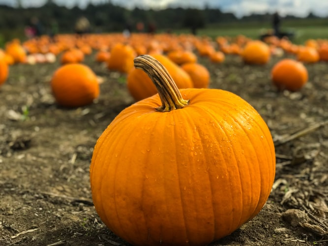 stock pumpkin photo